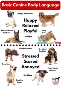 basic-canine-body-language